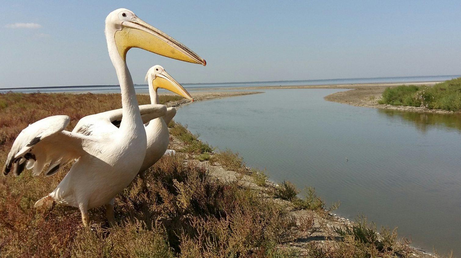 Из плена на волю: редких птиц из ресторана вернули в дикую природу (фото) «фото»