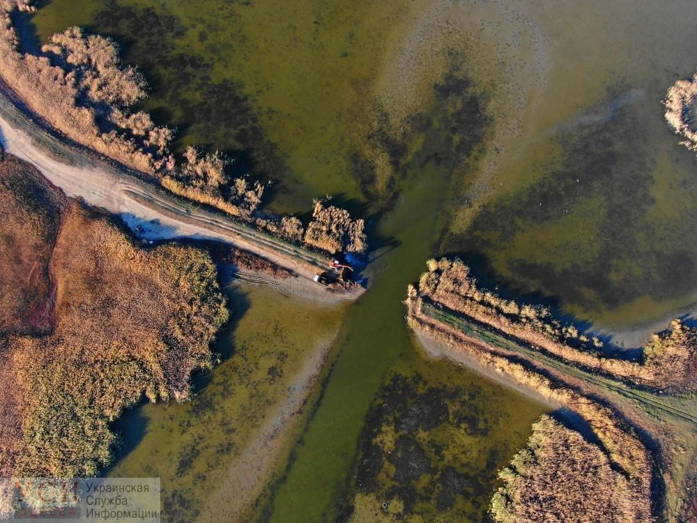 National Geographic покажет сериал про дикую природу Европы: один из эпизодов – про дельту Дуная «фото»