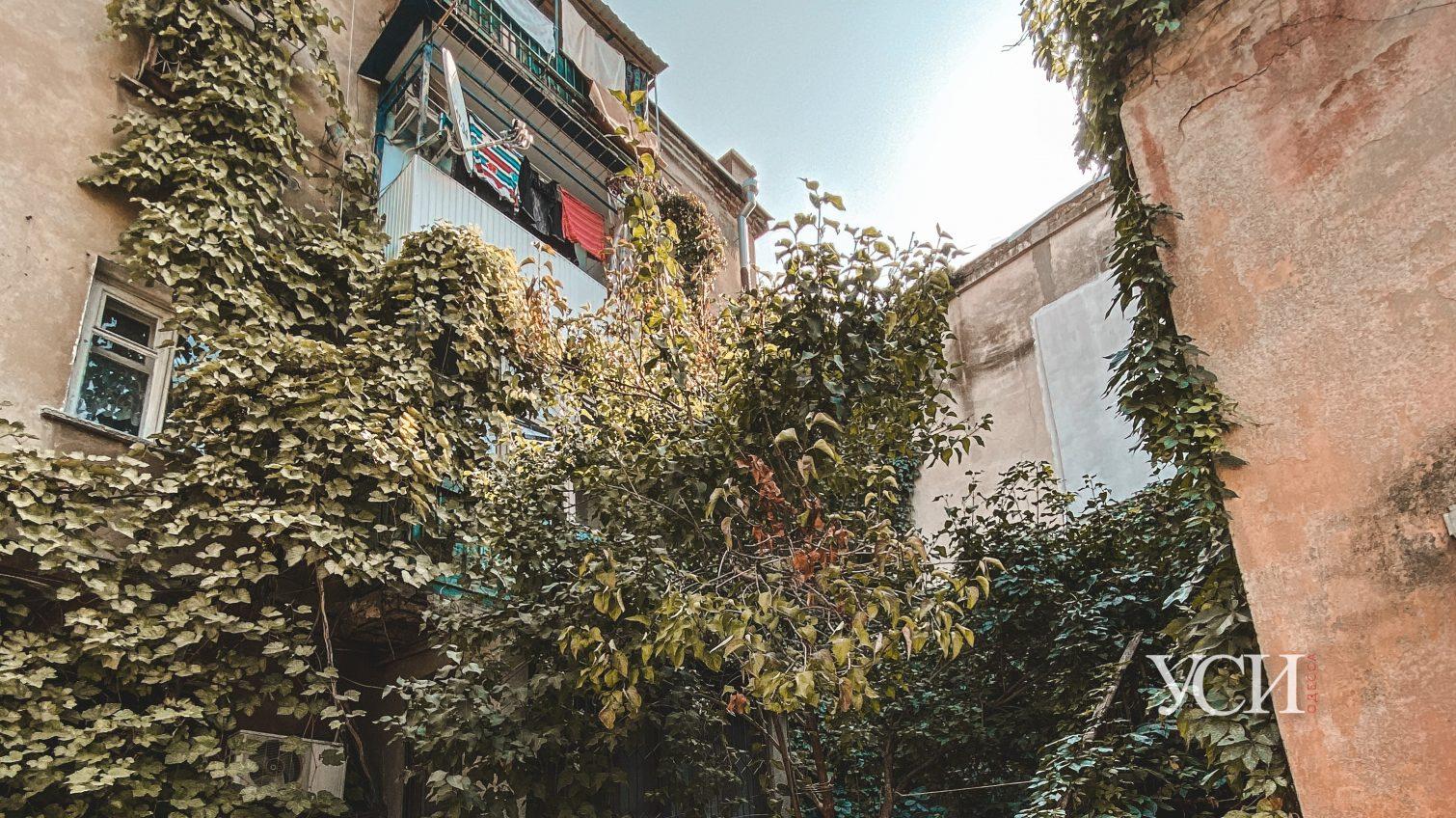 Неизвестная Одесса: дом в плюще и дворовой кран (фоторепортаж) «фото»