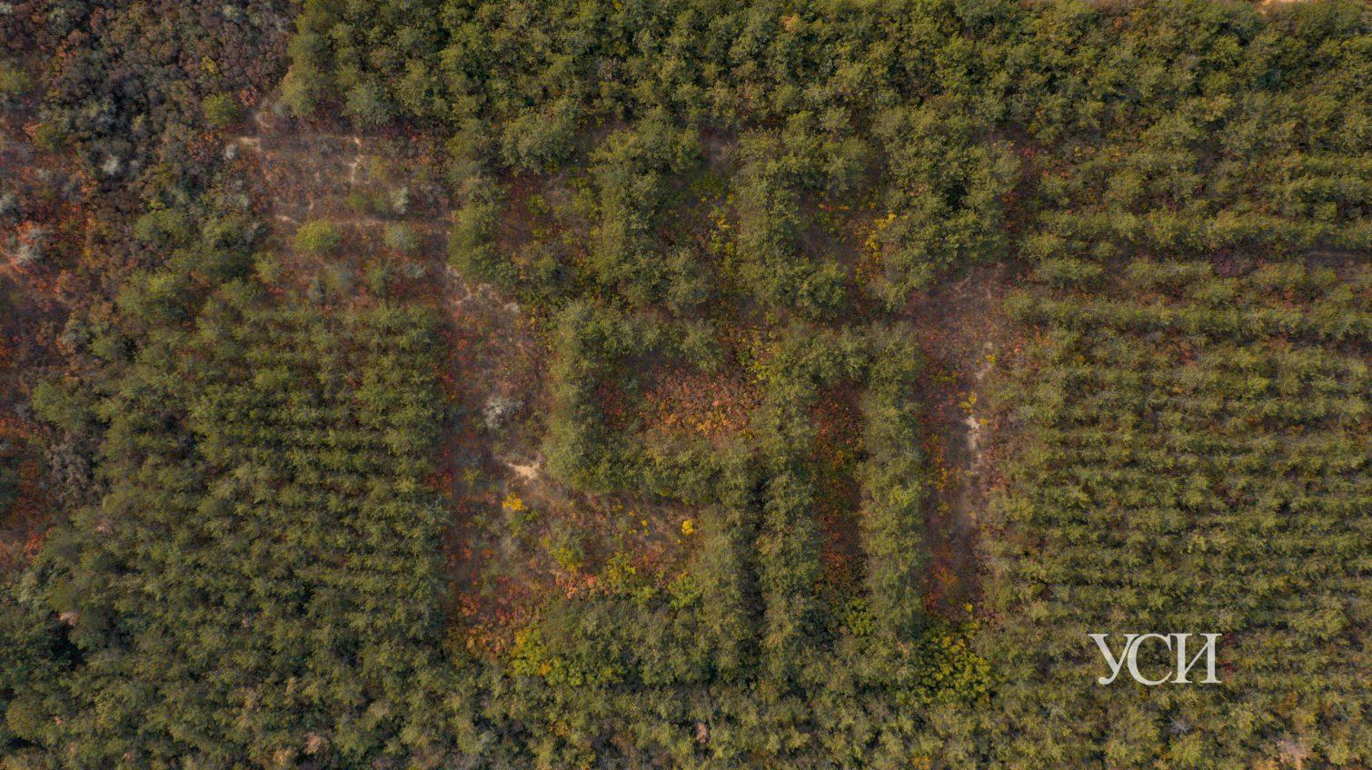 Напоминание об СССР посреди осенних красок: лес в Алтестово с высоты птичьего полета (аэросъемка) «фото»