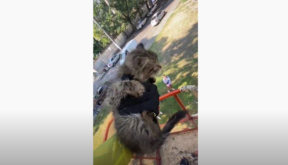 На Тираспольской одесситы вызвали вышку «Горзелентреста» и спасли котенка, который не мог слезть с дерева (видео) «фото»