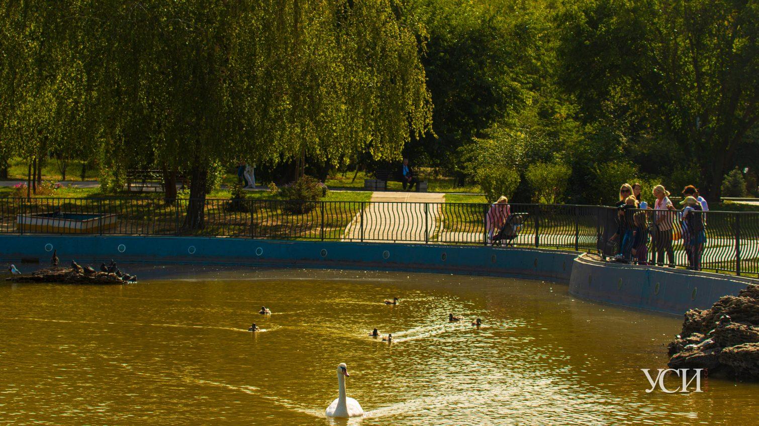 Черепахи, утки, люди: осенняя атмосфера в парке Победы (фоторепортаж) «фото»