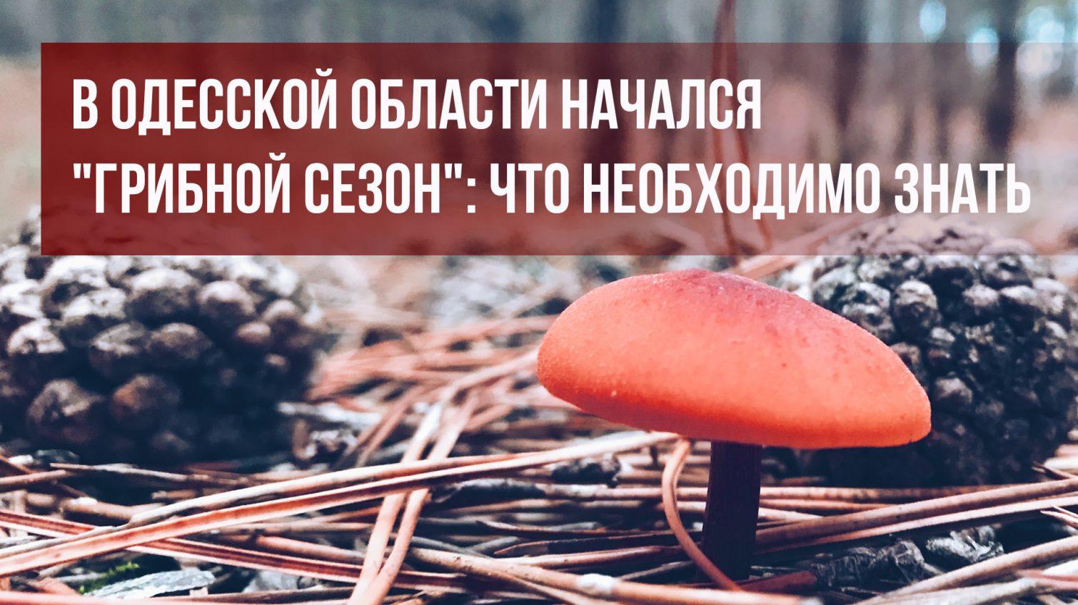 В Одесской области начался грибной сезон: что необходимо знать (фото) «фото»