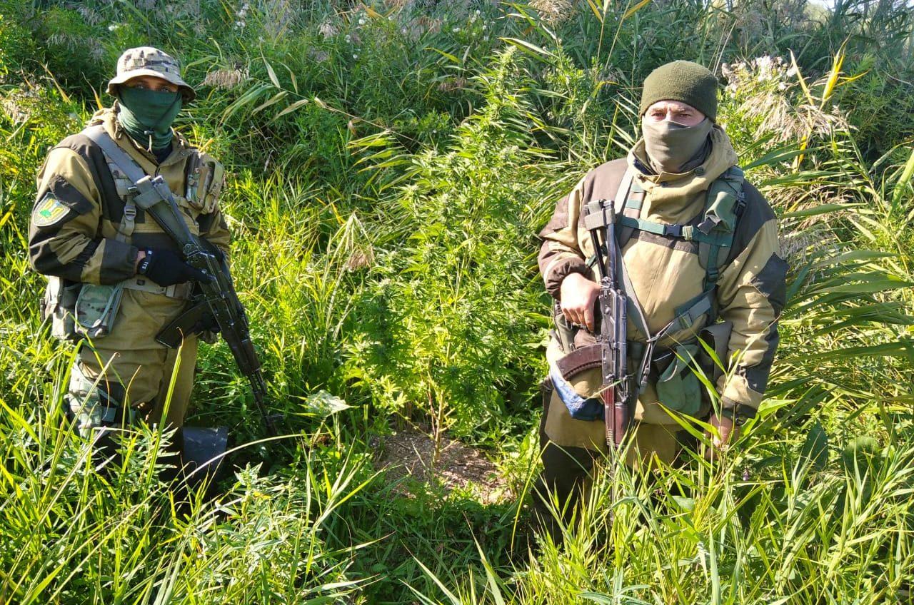 Житель Одесской области выращивал коноплю на острове посреди Дуная вблизи границы с Румынией (фото) «фото»