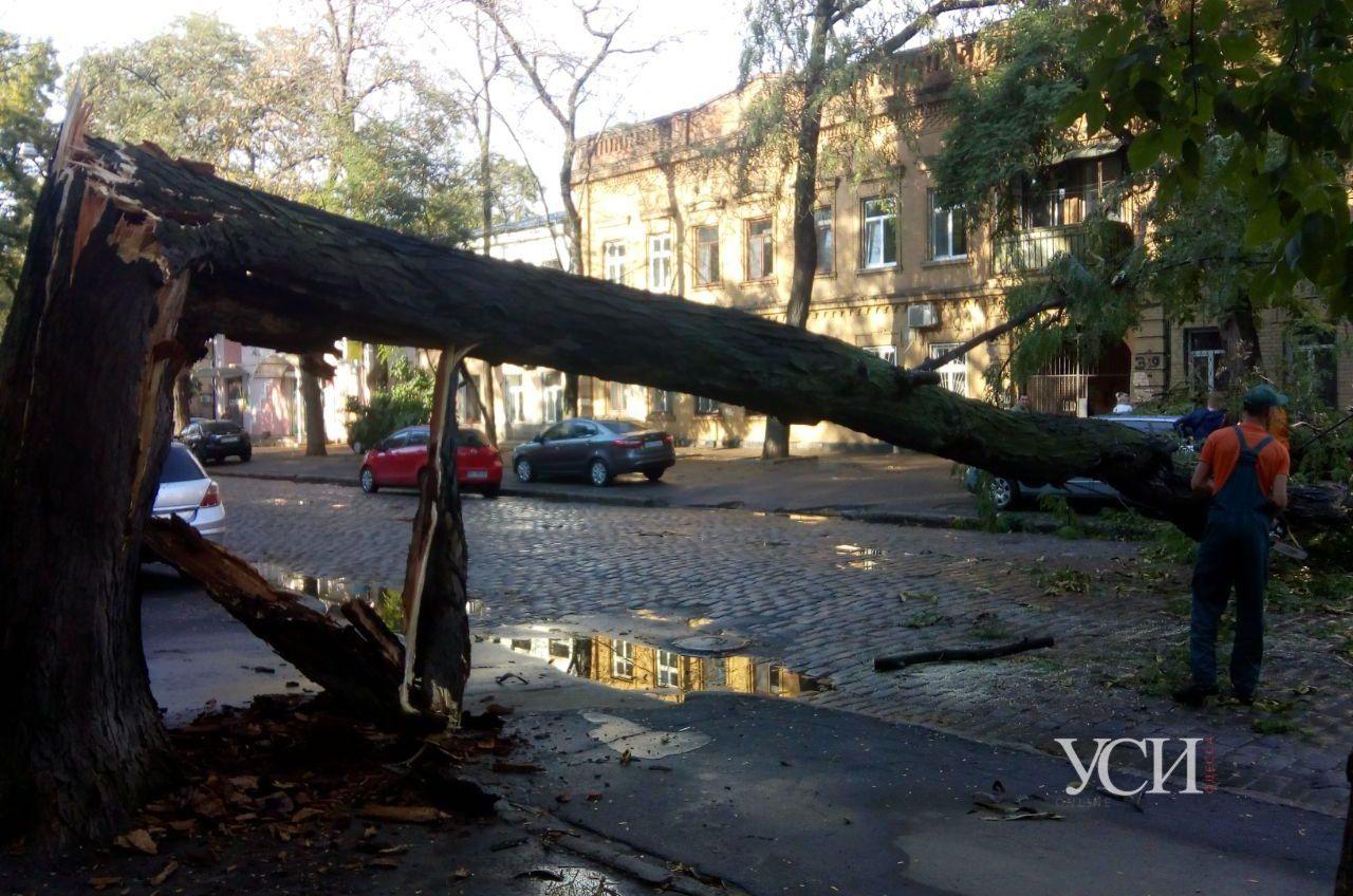 В центре из-за дождя рухнуло дерево и повредило машину (фото, видео) «фото»