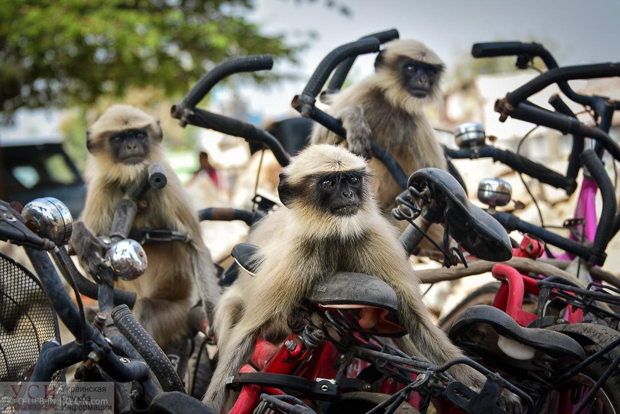 Лангуры на гонках: комический кадр одесского фотографа попал в ТОП-10 «фото»