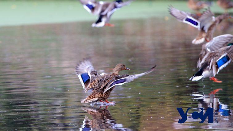 Разруха, зеленая вода и уточки: как сейчас выглядит парк Савицкого (фоторепортаж) «фото»