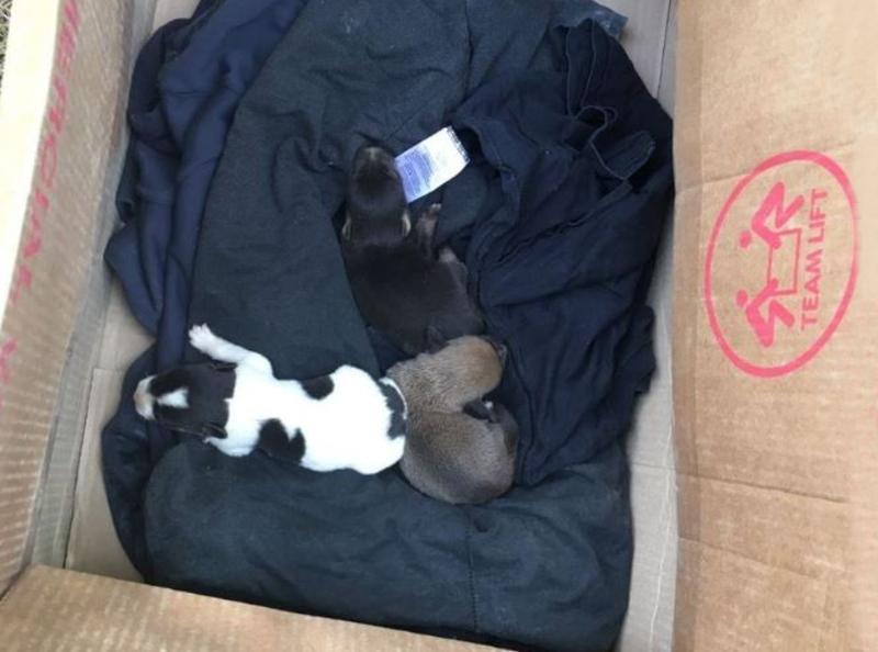 Спасенное семейство: в Одесской области освободили из западни собаку со щенками (фото) «фото»