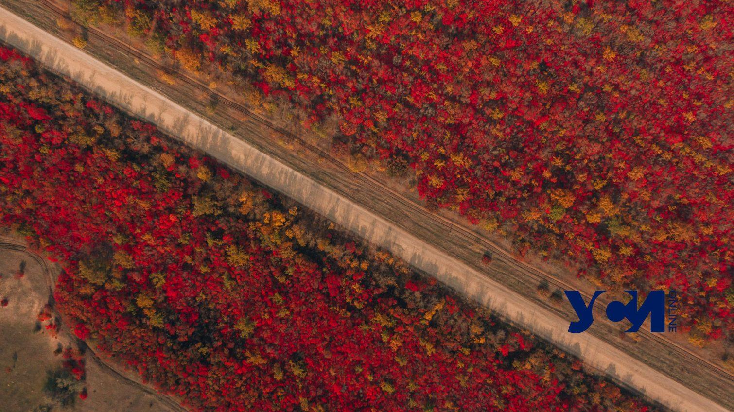 Редкий вид: под Одессой растет красный лес (фото) «фото»