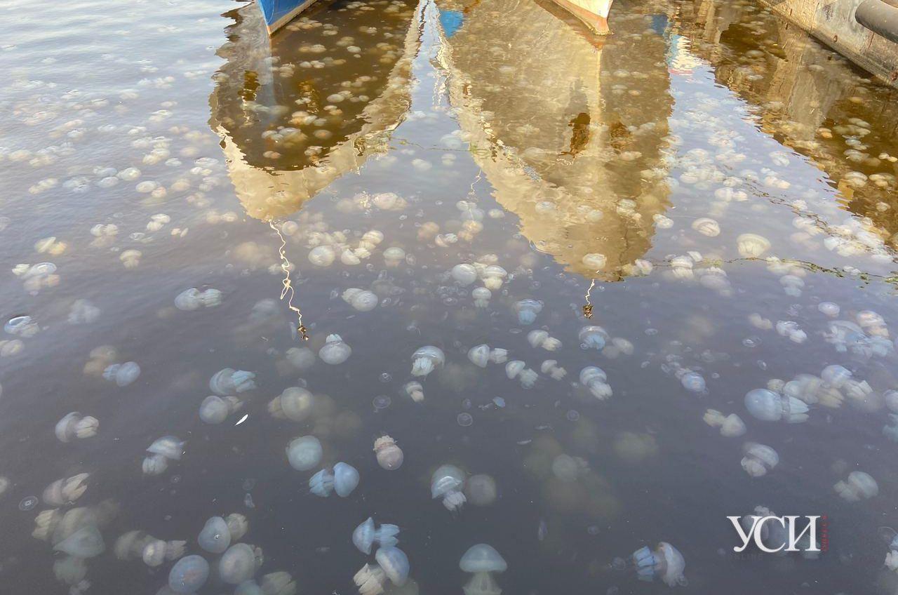 В акватории Одесского морвокзала — нашествие медуз (фото, видео) «фото»