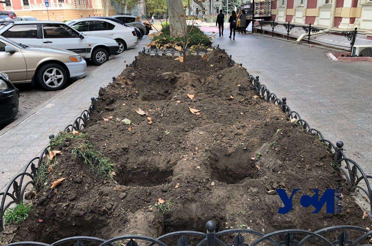 Одесский «Горзелентрест» готовит лунки для высадки цветников возле мэрии 📷 «фото»