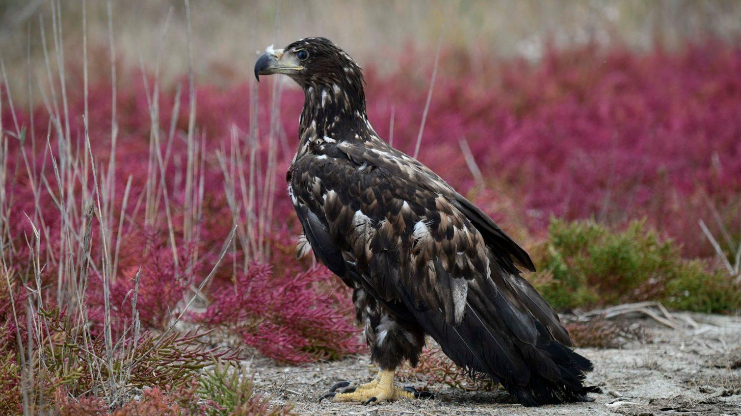 В Одесской области выпустили на волю спасенную редкую птицу (фото) «фото»