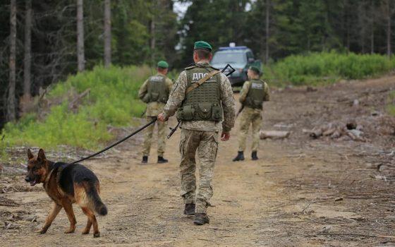 Лисица напала на собаку подольских пограничников (фото) «фото»