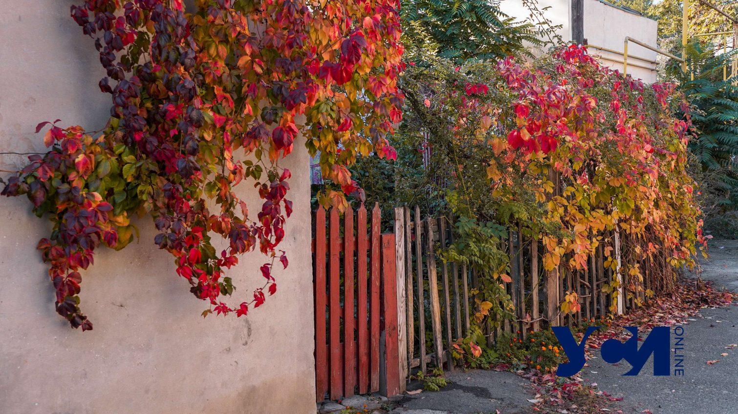 Нетронутые временем: дворики на Лазарева (фото) «фото»
