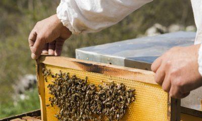 Климат и коронавирус: пчеловоды в кризисе, а одесский мед – в дефиците «фото»