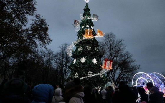 Главная елка Одессы обойдется городу почти в 2 миллиона «фото»