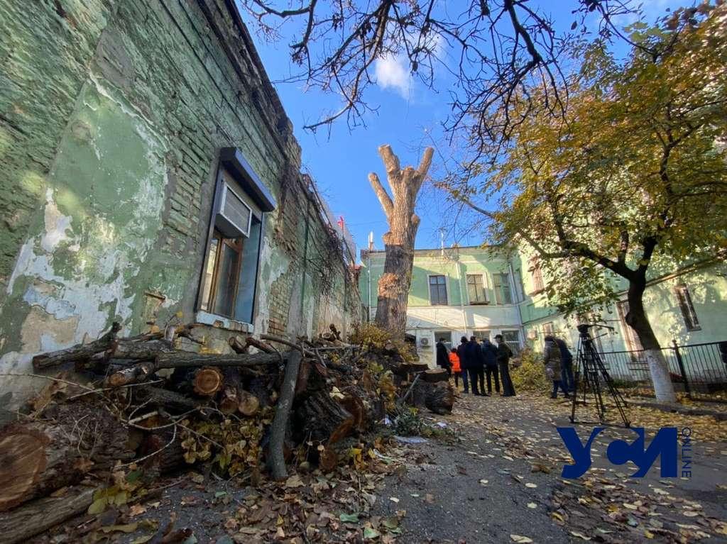 Коммунальщики объяснили, зачем изуродовали вековой тополь на Торговой (фото) «фото»