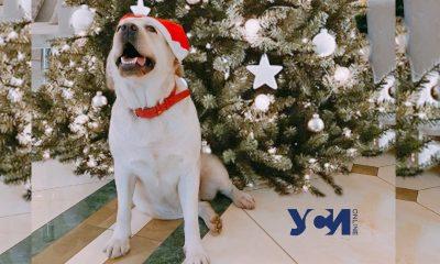 Стресс или спокойствие: как собаки реагируют на новогодний фейерверк (фото) «фото»