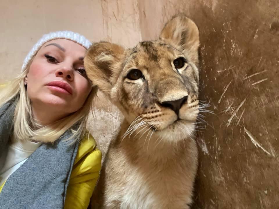 Львенок, спасенный из ночного клуба в Одессе, поедет домой в Африку (фото, видео) «фото»