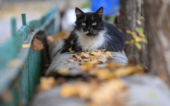 В Одессе будет пасмурно, но обойдется без дождя «фото»
