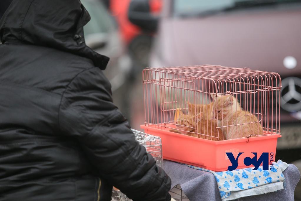 Одесса в декабре: осень задержалась на Молдаванке (фото) «фото»