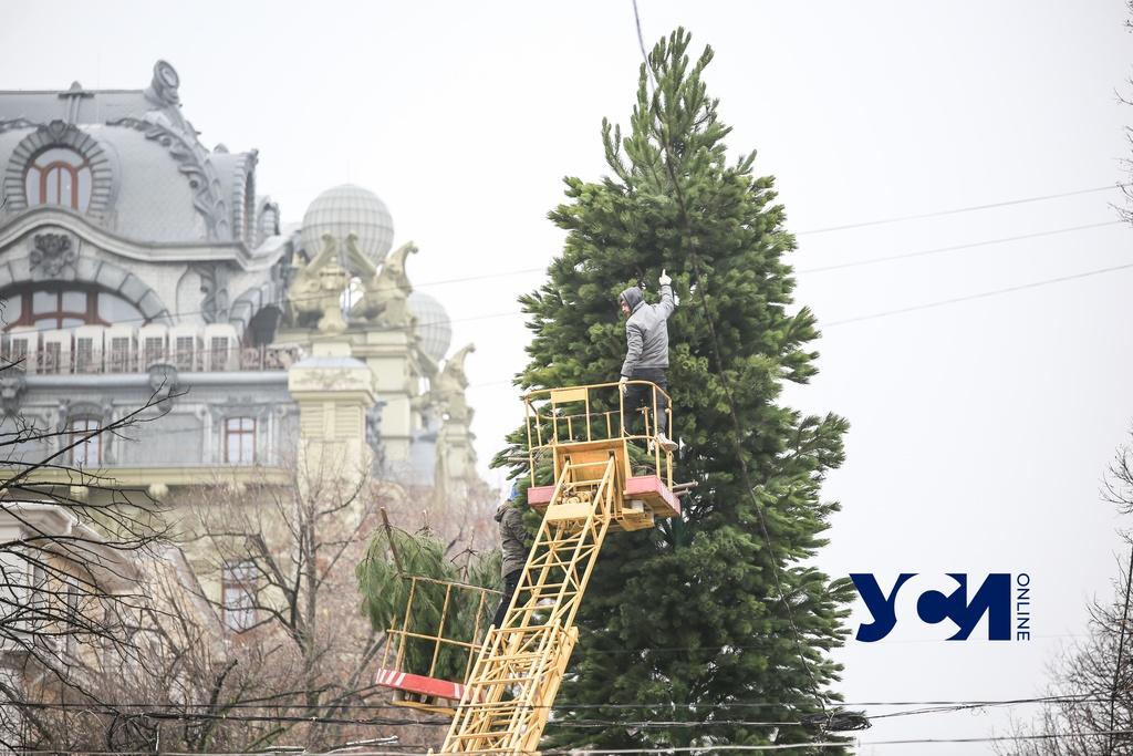На Дерибасовской устанавливают новогоднюю елку (фото) «фото»