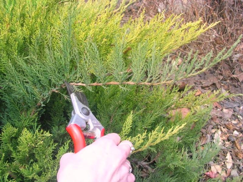 Крала растения и кабель: полиция предъявила одесситке подозрение «фото»