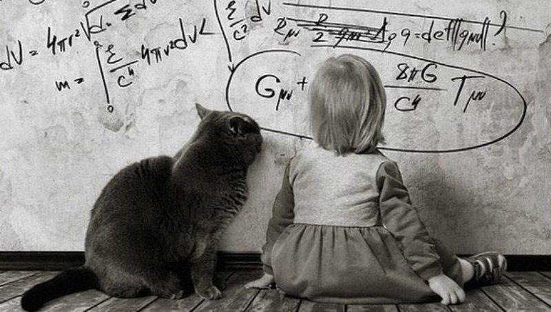 В Одессе 6-летняя девочка «заминировала» школу, чтобы дома поиграть с котом «фото»