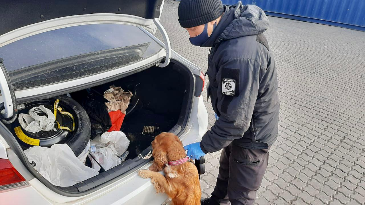 В Одесском порту собака пограничников нашла патроны: их везли из США (фото и видео) «фото»