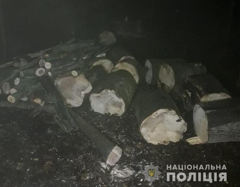 За две софоры – 5 лет тюрьмы: в Одесской области лесорубов могут сурово наказать «фото»