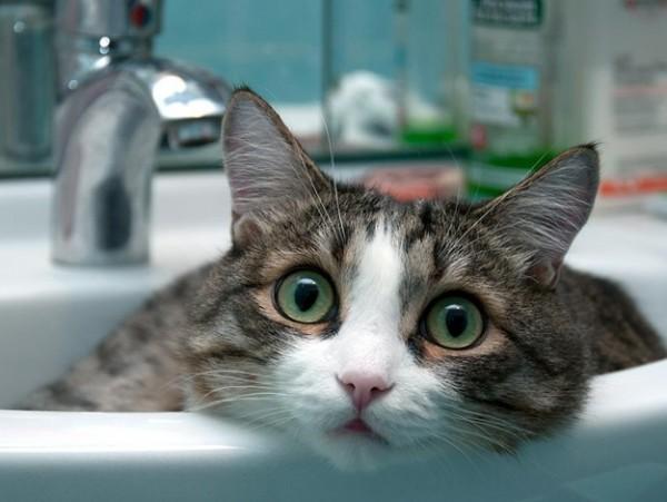 В понедельник на Фонтане отключат воду (адреса) «фото»