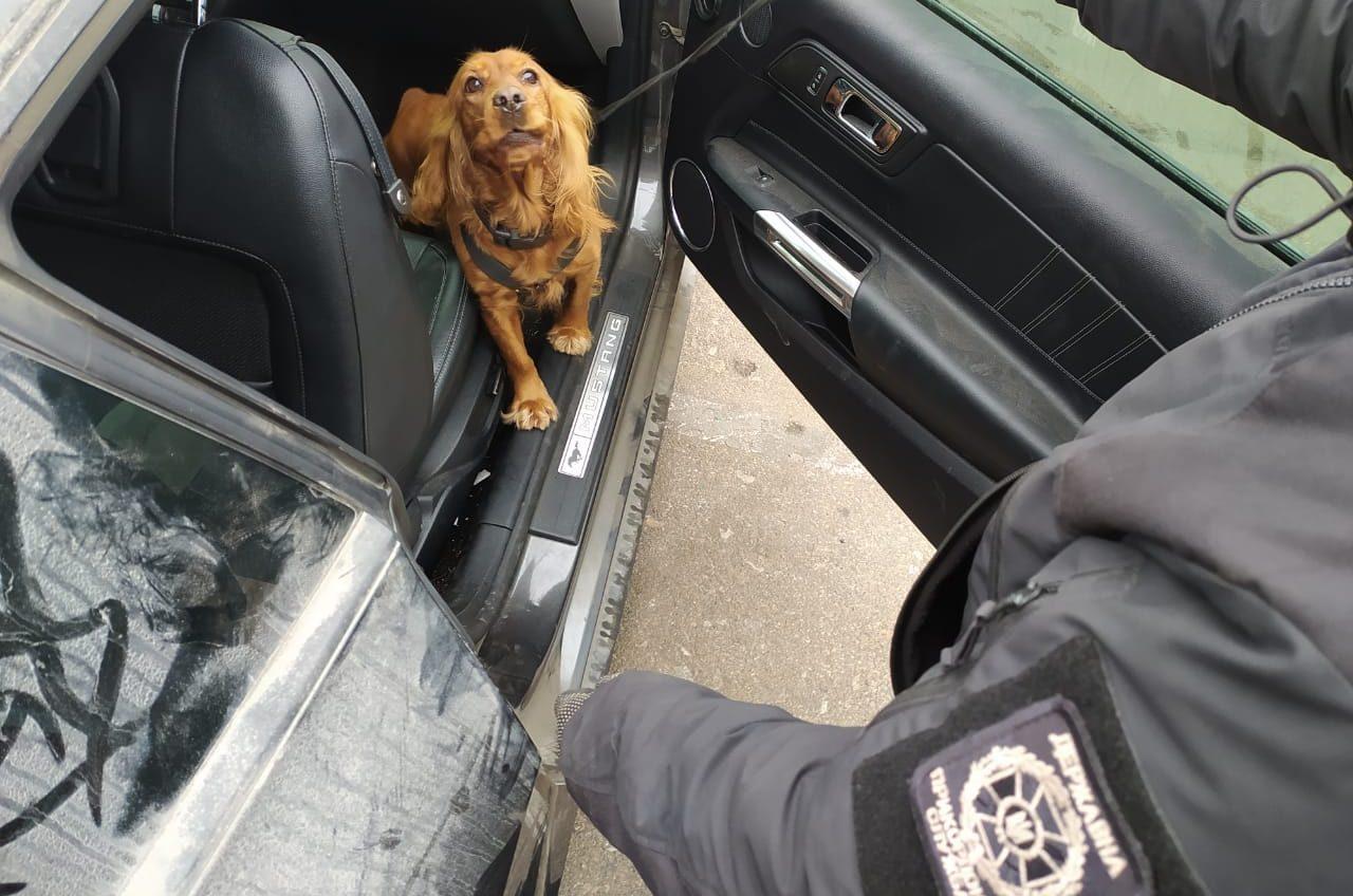 Машины с «сюрпризами»: в двух портах Одесской области собаки унюхали наркотики (фото, видео) «фото»