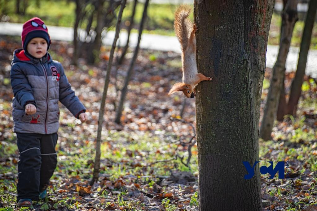Кормить белок и уток: одесситы с детьми вышли прогуляться в парк накануне Нового года (фото) «фото»