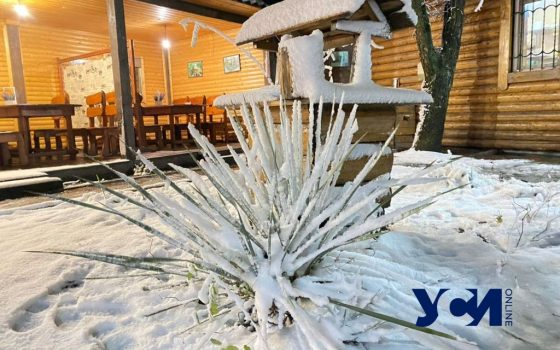 Цветы в снегу: в Одесскую область пришла зима (фото, видео) «фото»