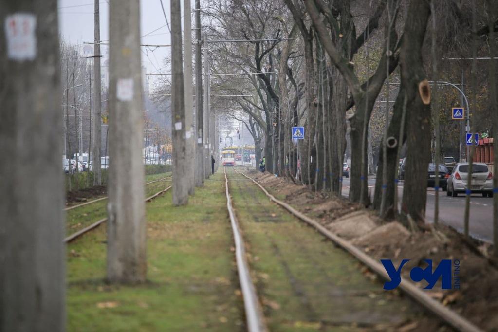 «Тоннель любви» на Фонтане на финальной стадии: общественники высадили все деревья (фото, аудио) «фото»