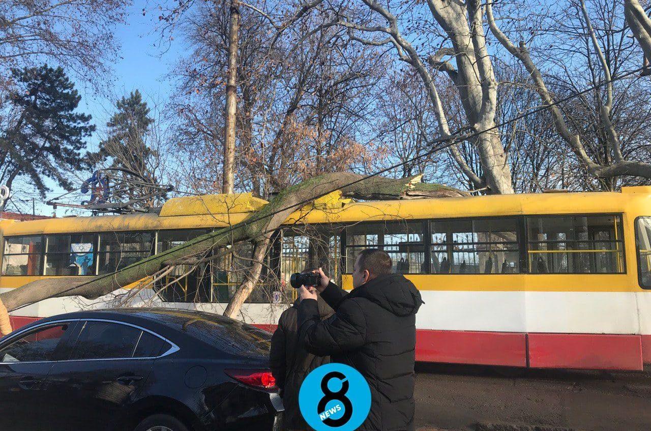 В разных концах Одессы деревья упали на трамваи, оборвав провода (фото) «фото»