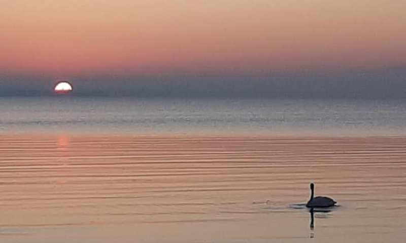 Под Одессой заметили одинокого лебедя (фото) «фото»