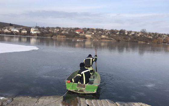 В Одесской области стая лебедей попала в ледяной плен (фото) «фото»