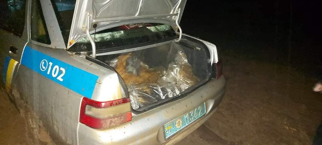 Под Одессой неизвестные расстреляли уличных собак (осторожно, фото) «фото»