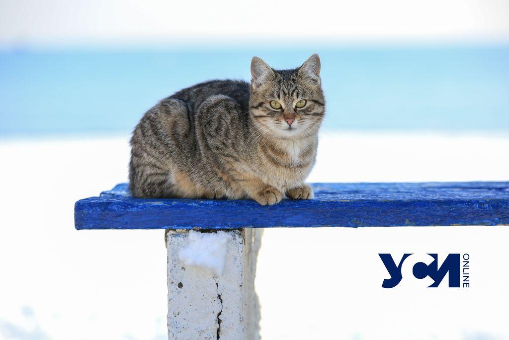 Одесский приют для животных остался без корма: просят помочь «фото»
