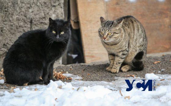 Холод в Одессе: как коты и люди проводят время на улицах (фото) «фото»