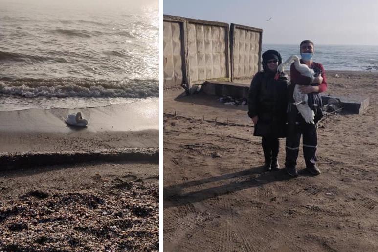 На пляже Суворовского района водолазы спасли лебедя и передали в зоопарк (фото) «фото»