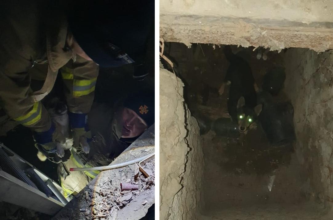 Одесские спасатели вытащили трех щенков из западни (фото) «фото»