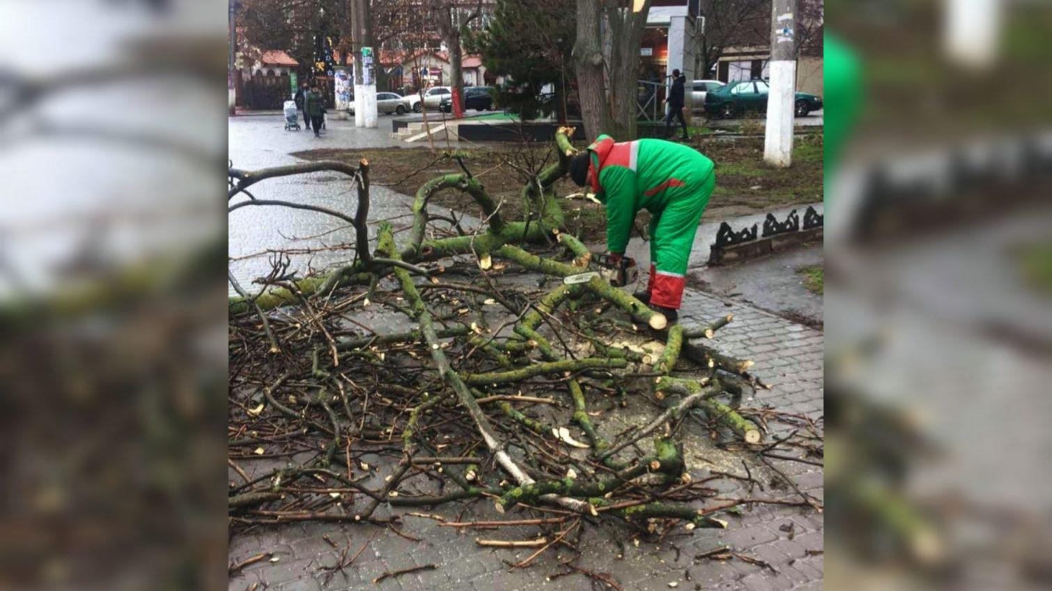 Древопад: в Одессе из-за ветра падают большие ветки (фото) «фото»
