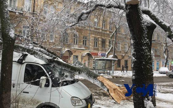 На Льва Толстого дерево упало на машины и оборвало провода (фото, видео) «фото»