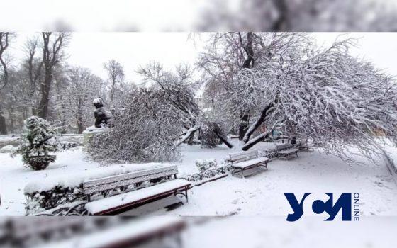 Знаменитое иудино дерево в Горсаду не выдержало снегопада (фото) «фото»