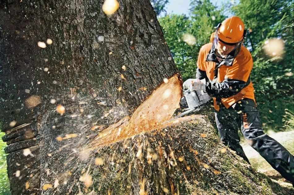 В Одесской области железнодорожники незаконно вырубали лес (фото) «фото»