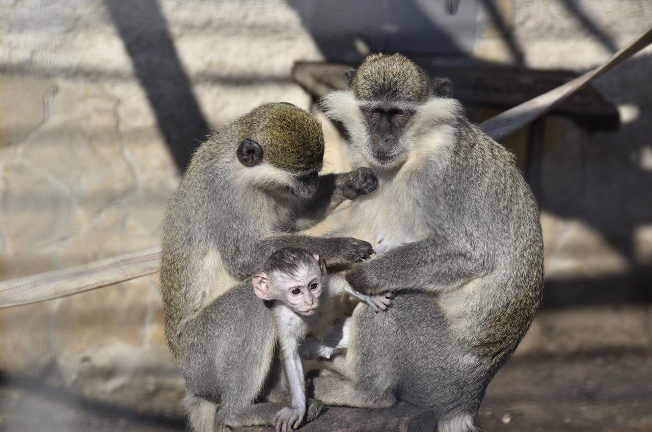 В Одесском зоопарке выбирают самую романтичную пару года: можно голосовать (фото) «фото»