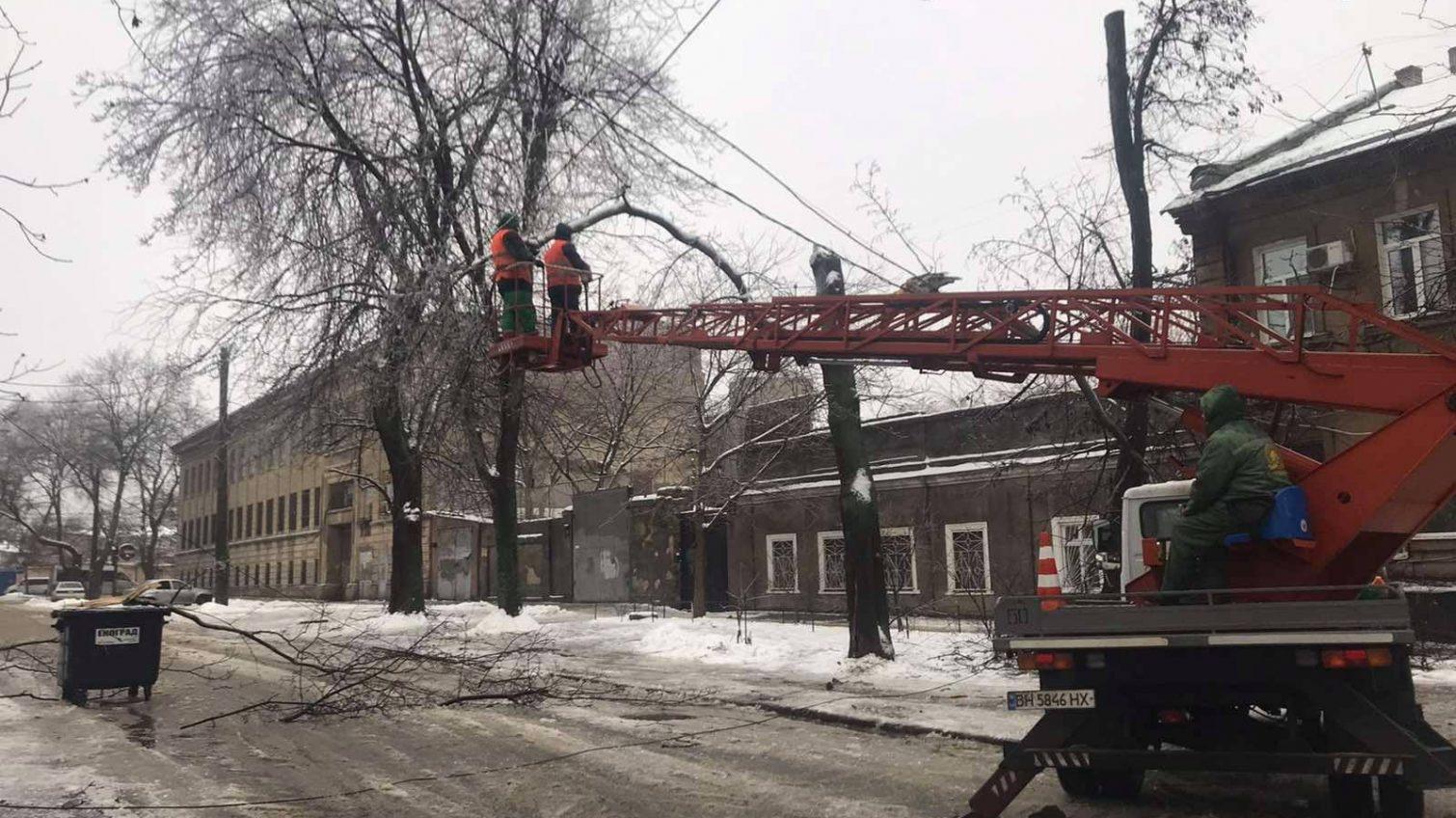 В Одессе падают деревья из-за обледенения (фото) «фото»
