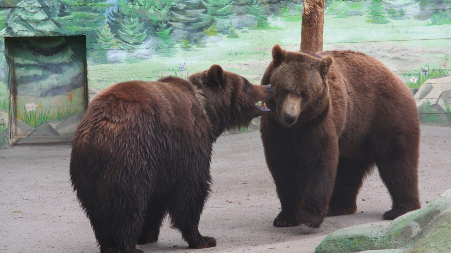 В одесском зоопарке выбрали пару года (фото) «фото»